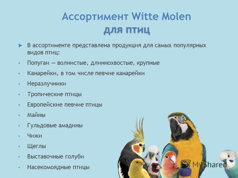 для птиц Ассортимент Witte Molen для птиц В ассортименте представлена продукция для самых популярных видов птиц: Попугаи волнистые, длиннохвостые, крупные Канарейки, в том числе певчие канарейки Неразлучники Тропические птицы Европейские певчие птицы