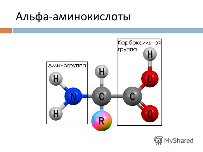 Альфа - аминокислоты