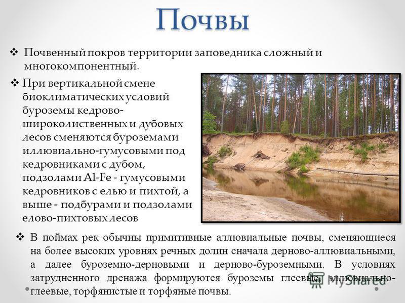 Почвы В поймах рек обычны примитивные аллювиальные почвы, сменяющиеся на более высоких уровнях речных долин сначала дерново-аллювиальными, а далее буроземной-дерновыми и дерново-буроземными. В условиях затрудненного дренажа формируются буроземы глеев