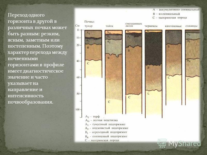 Переход одного горизонта в другой в различных почвах может быть разным: резким, ясным, заметным или постепенным. Поэтому характер перехода между почвенными горизонтами в профиле имеет диагностическое значение и часто указывает на направление и интенс
