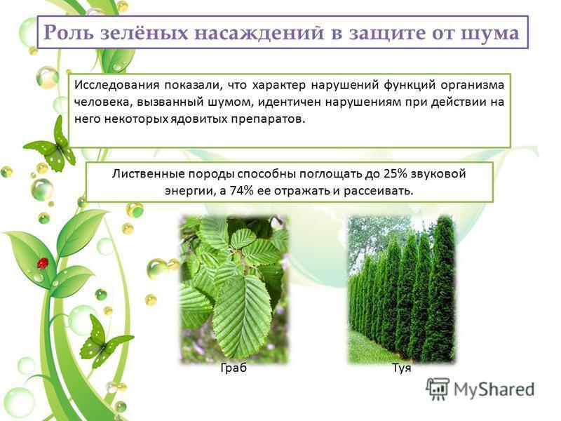 Роль зелёных насаждений в защите от шума Исследования показали, что характер нарушений функций организма человека, вызванный шумом, идентичен нарушениям при действии на него некоторых ядовитых препаратов. Лиственные породы способны поглощать до 25% з