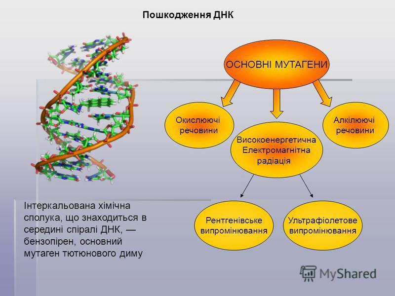 Пошкодження ДНК Інтеркальована хімічна сполука, що знаходиться в середині спіралі ДНК, бензопірен, основний мутаген тютюнового диму ОСНОВНІ МУТАГЕНИ Окислюючі речовини Алкілюючі речовини Високоенергетична Електромагнітна радіація Рентгенівське випром