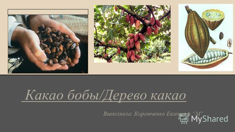 Какао бобы/Дерево какао Выполнила: Коротченко Евгения 6 М