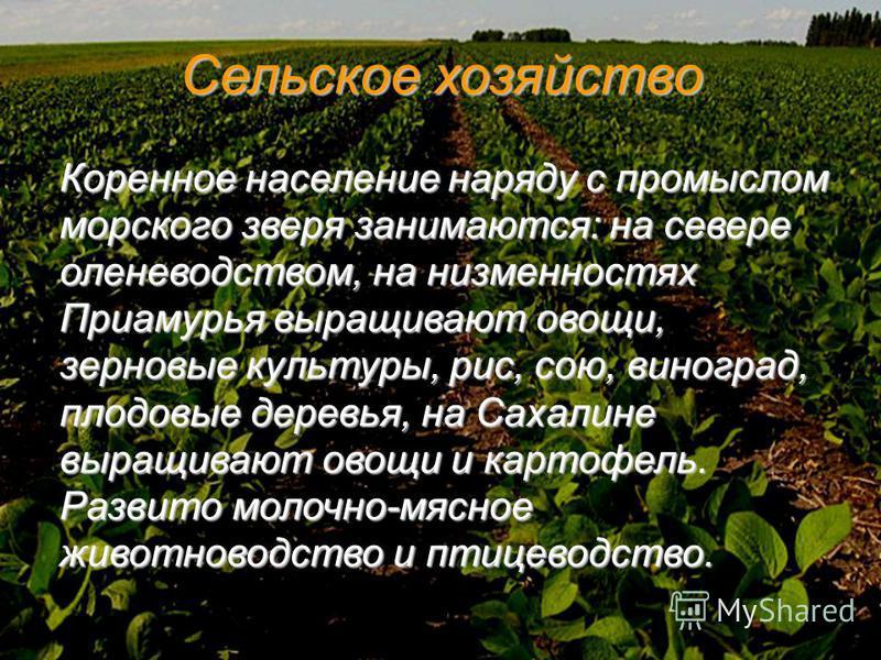 Сельское хозяйство Коренное население наряду с промыслом морского зверя занимаются: на севере оленеводством, на низменностях Приамурья выращивают овощи, зерновые культуры, рис, сою, виноград, плодовые деревья, на Сахалине выращивают овощи и картофель