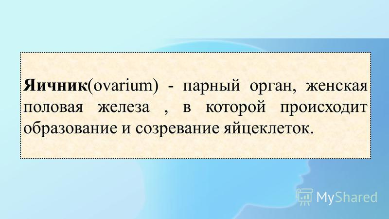 Яичник(ovarium) - парный орган, женская половая железа, в которой происходит образование и созревание яйцеклеток.