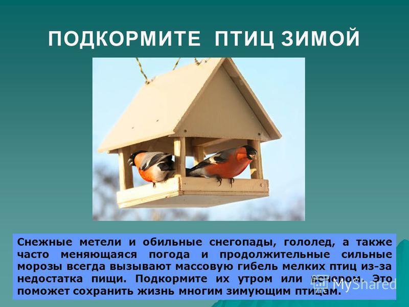 ПОДКОРМИТЕ ПТИЦ ЗИМОЙПОДКОРМИТЕ ПТИЦ ЗИМОЙ Снежные метели и обильные снегопады, гололед, а также часто меняющаяся погода и продолжительные сильные морозы всегда вызывают массовую гибель мелких птиц из-за недостатка пищи. Подкормите их утром или вечер