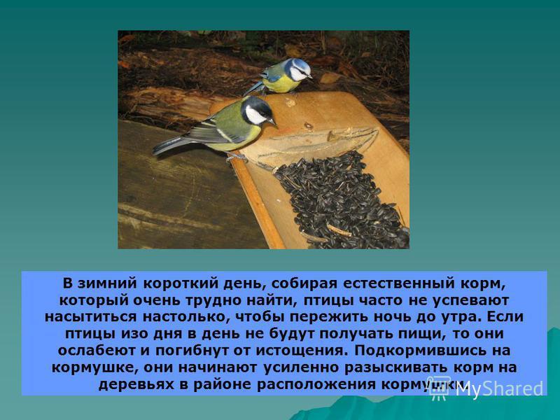 В зимний короткий день, собирая естественный корм, который очень трудно найти, птицы часто не успевают насытиться настолько, чтобы пережить ночь до утра. Если птицы изо дня в день не будут получать пищи, то они ослабеют и погибнут от истощения. Подко