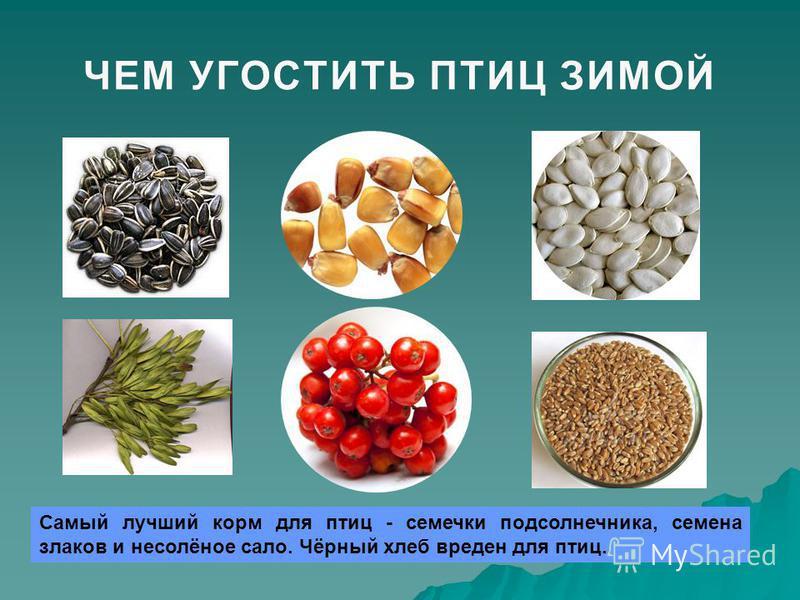 ЧЕМ УГОСТИТЬ ПТИЦ ЗИМОЙЧЕМ УГОСТИТЬ ПТИЦ ЗИМОЙ Самый лучший корм для птиц - семечки подсолнечника, семена злаков и несолёное сало. Чёрный хлеб вреден для птиц.