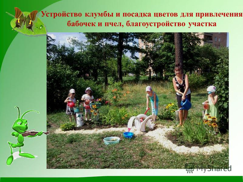 Устройство клумбы и посадка цветов для привлечения бабочек и пчел, благоустройство участка