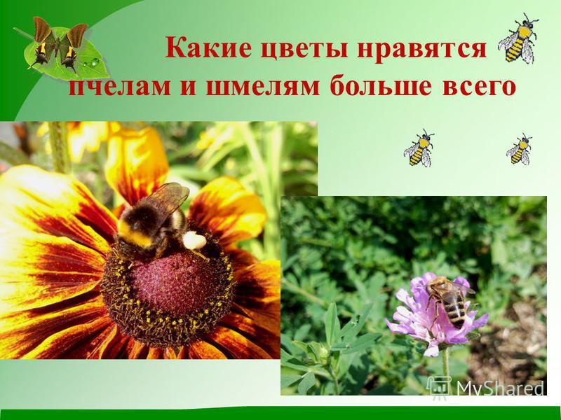 Какие цветы нравятся пчелам и шмелям больше всего