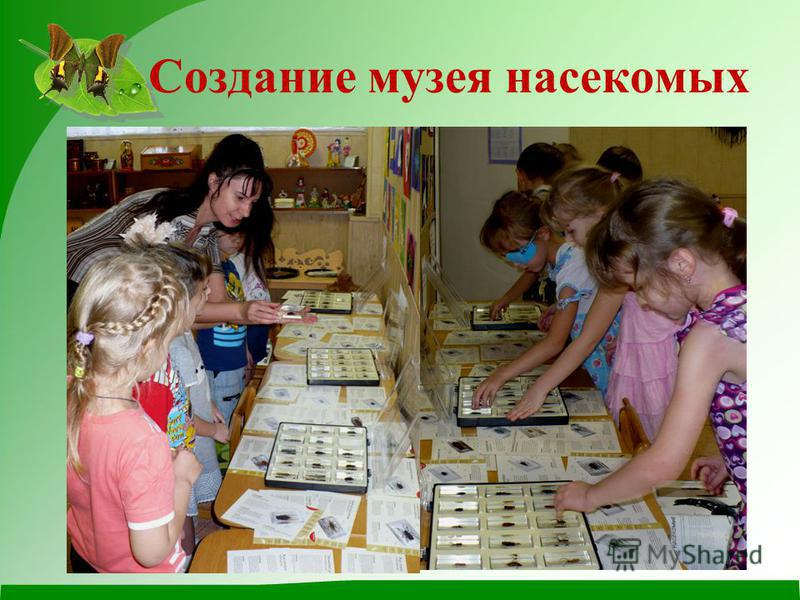 Создание музея насекомых