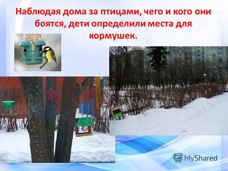 Наблюдая дома за птицами, чего и кого они боятся, дети определили места для кормушек.