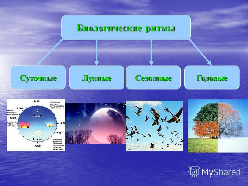 Биологические ритмы Сезонные СуточныеГодовые Лунные