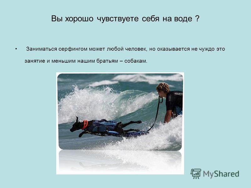 Вы хорошо чувствуете себя на воде ? Заниматься серфингом может любой человек, но оказывается не чуждо это занятие и меньшим нашим братьям – собакам.