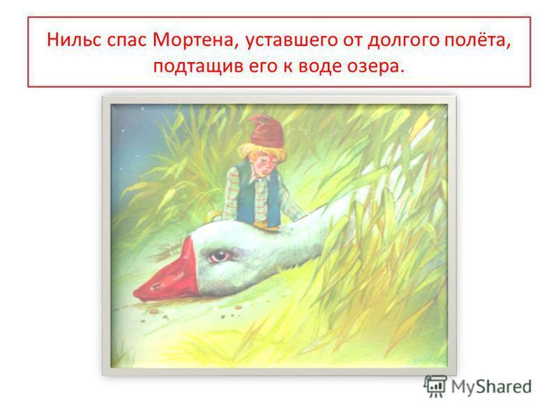 Нильс спас Мортена, уставшего от долгого полёта, подтащив его к воде озера.