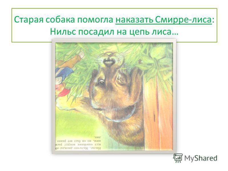 Старая собака помогла наказать Смирре-лиса: Нильс посадил на цепь лиса…