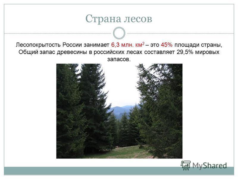 Страна лесов Лесопокрытость России занимает 6,3 млн. км 2 – это 45% площади страны, Общий запас древесины в российских лесах составляет 29,5% мировых запасов.