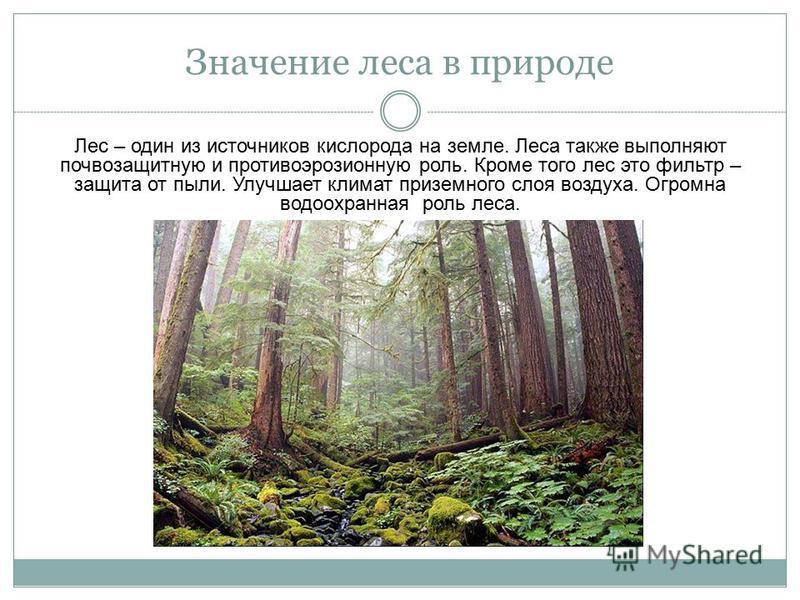 Значение леса в природе Лес – один из источников кислорода на земле. Леса также выполняют почвозащитную и противоэрозионную роль. Кроме того лес это фильтр – защита от пыли. Улучшает климат приземного слоя воздуха. Огромна водоохранная роль леса.