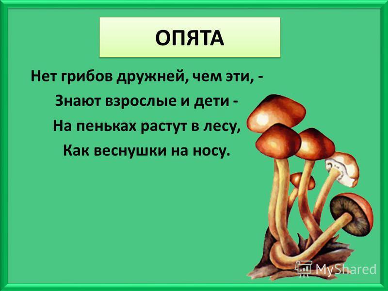 ОПЯТА Нет грибов дружней, чем эти, - Знают взрослые и дети - На пеньках растут в лесу, Как веснушки на носу.