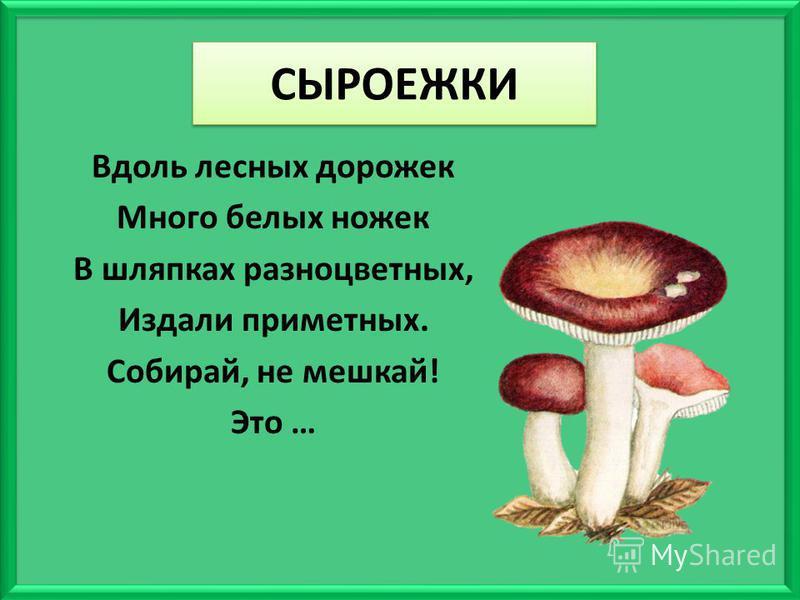 СЫРОЕЖКИ Вдоль лесных дорожек Много белых ножек В шляпках разноцветных, Издали приметных. Собирай, не мешкай! Это …
