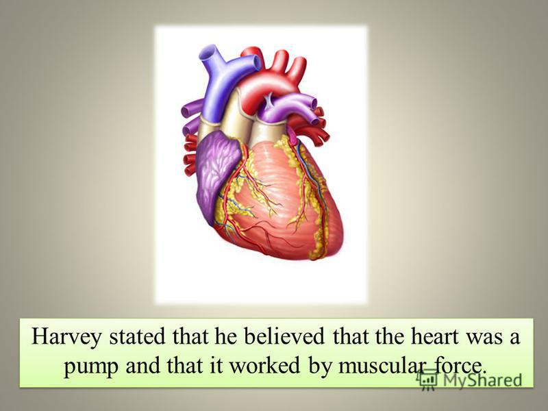 Harvey stated that he believed that the heart was a pump and that it worked by muscular force.