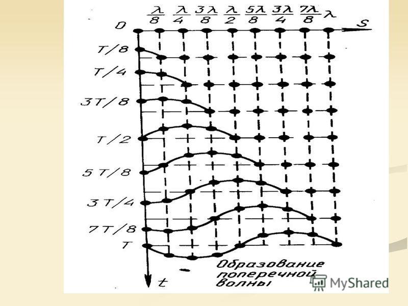 Распространение поперечных волн проиллюстрировано на рисунке: