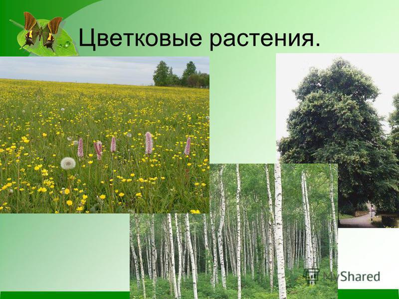 Цветковые растения.