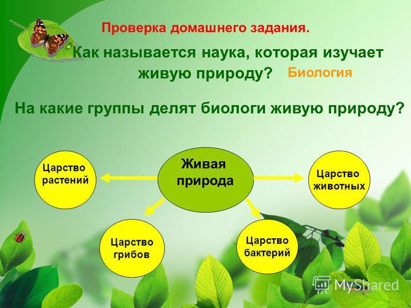 Проверка домашнего задания. Как называется наука, которая изучает живую природу? Биология Живая природа Царство растений Царство грибов Царство бактерий Царство животных На какие группы делят биологи живую природу?