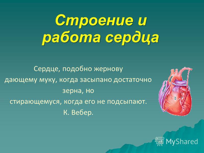 Сердце, подобно жернову дающему муку, когда засыпано достаточно зерна, н о стирающемуся, когда его не подсыпают. К. Вебер. Строение и работа сердца