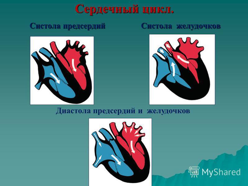 Сердечный цикл. Систола желудочков Систола предсердий Диастола предсердий и желудочков