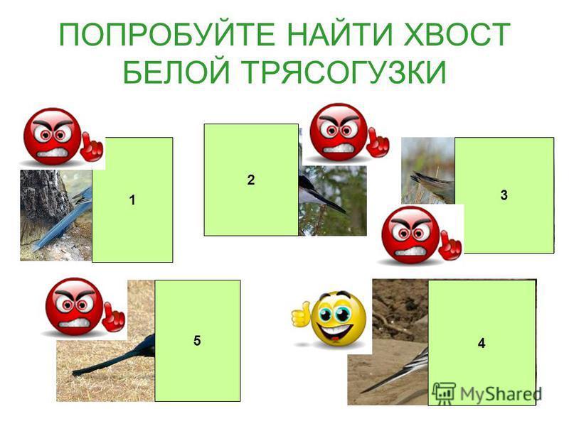 Ежегодно Союз охраны птиц России выбирает птицу года.