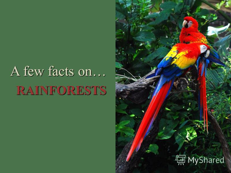 A few facts on… RAINFORESTS