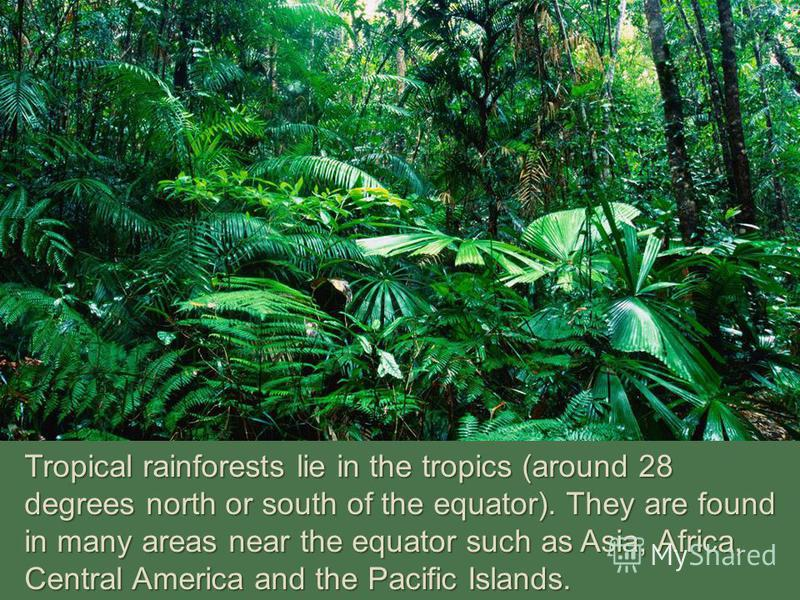 Tropical rainforests lie in the tropics (around 28 degrees north or south of the equator). They are found in many areas near the equator such as Asia, Africa, Central America and the Pacific Islands.