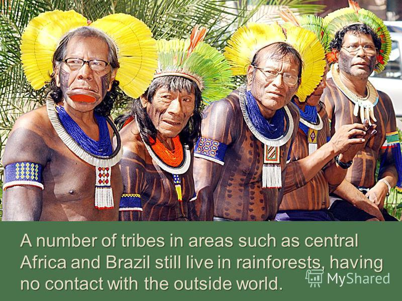 A number of tribes in areas such as central Africa and Brazil still live in rainforests, having no contact with the outside world.