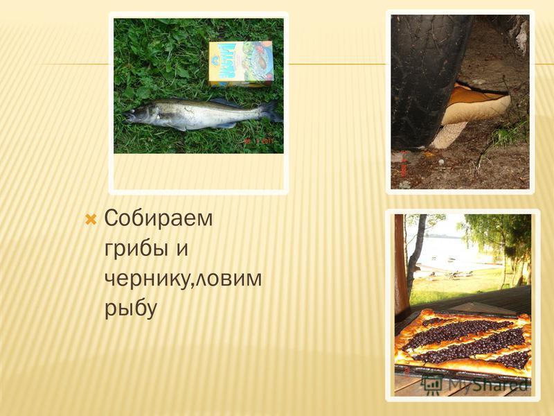 Собираем грибы и чернику,ловим рыбу