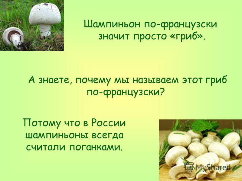 А знаете, почему мы называем этот гриб по-французски? Шампиньон по-французски значит просто «гриб». Потому что в России шампиньоны всегда считали поганками.