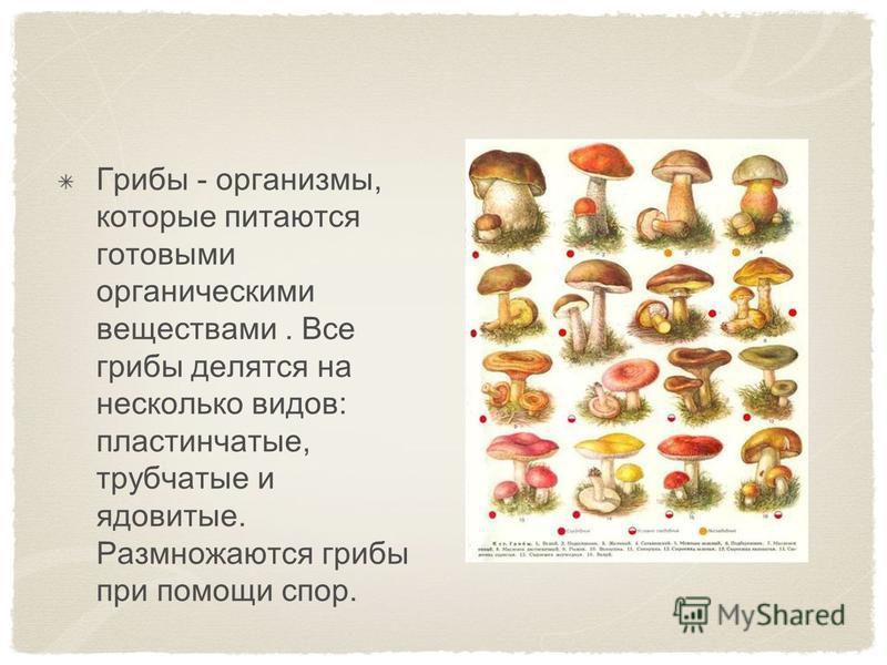 Грибы - организмы, которые питаются готовыми органическими веществами. Все грибы делятся на несколько видов: пластинчатые, трубчатые и ядовитые. Размножаются грибы при помощи спор.