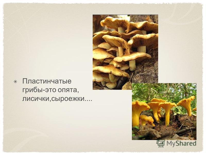 Пластинчатые грибы-это опята, лисички,сыроежки....