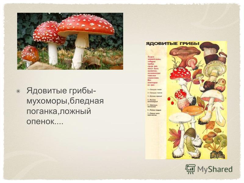 Ядовитые грибы- мухоморы,бледная поганка,ложный опенок....
