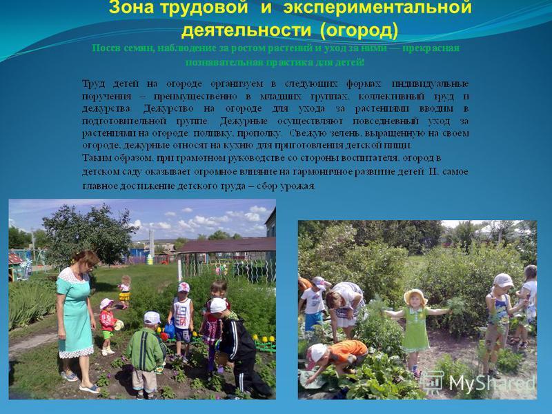 Зона трудовой и экспериментальной деятельности (огород)