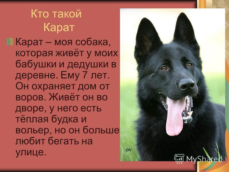 Кто такой Карат Карат – моя собака, которая живёт у моих бабушки и дедушки в деревне. Ему 7 лет. Он охраняет дом от воров. Живёт он во дворе, у него есть тёплая будка и вольер, но он больше любит бегать на улице.