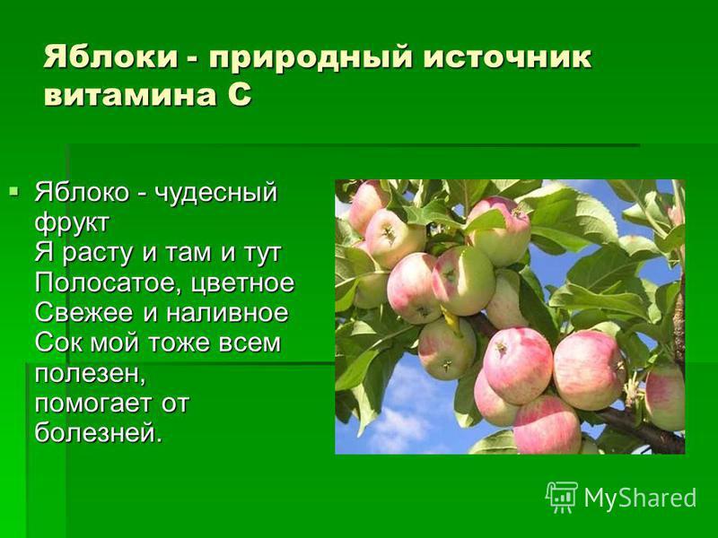 Яблоко - чудесный фрукт Я расту и там и тут Полосатое, цветное Свежее и наливное Сок мой тоже всем полезен, помогает от болезней. Яблоко - чудесный фрукт Я расту и там и тут Полосатое, цветное Свежее и наливное Сок мой тоже всем полезен, помогает от