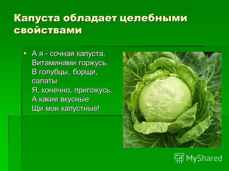 Капуста обладает целебными свойствами А я - сочная капуста, Витаминами горжусь. В голубцы, борщи, салаты Я, конечно, пригожусь. А какие вкусные Щи мои капустные! А я - сочная капуста, Витаминами горжусь. В голубцы, борщи, салаты Я, конечно, пригожусь