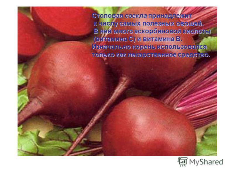 Столовая свекла принадлежит к числу самых полезных овощей. к числу самых полезных овощей. В ней много аскорбиновой кислоты В ней много аскорбиновой кислоты (витамина С) и витамина В. Изначально корень использовался только как лекарственное средство.