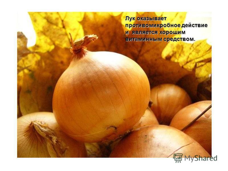 Лук оказывает противомикробное действие и является хорошим витаминным средством.