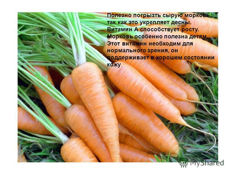 Полезно погрызть сырую морковь, так как это укрепляет десны. Витамин А способствует росту. Морковь особенно полезна детям. Этот витамин необходим для нормального зрения, он поддерживает в хорошем состоянии кожу.