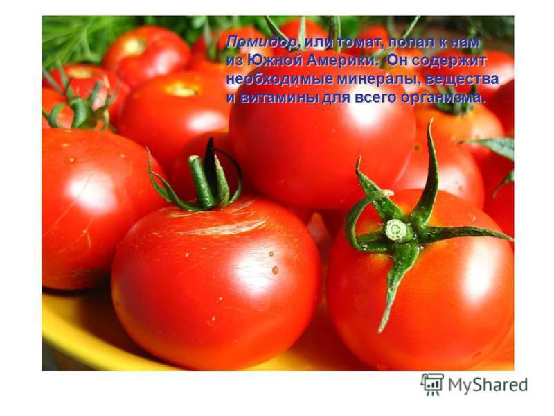 Помидор, или томат, попал к нам из Южной Америки. Он содержит необходимые минералы, вещества и витамины для всего организма.