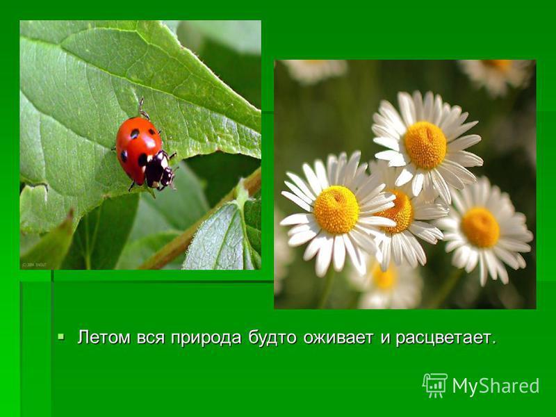 Летом вся природа будто оживает и расцветает. Летом вся природа будто оживает и расцветает.