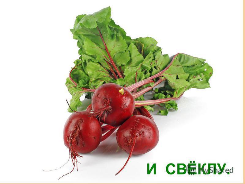 ПЕТРУШКУ
