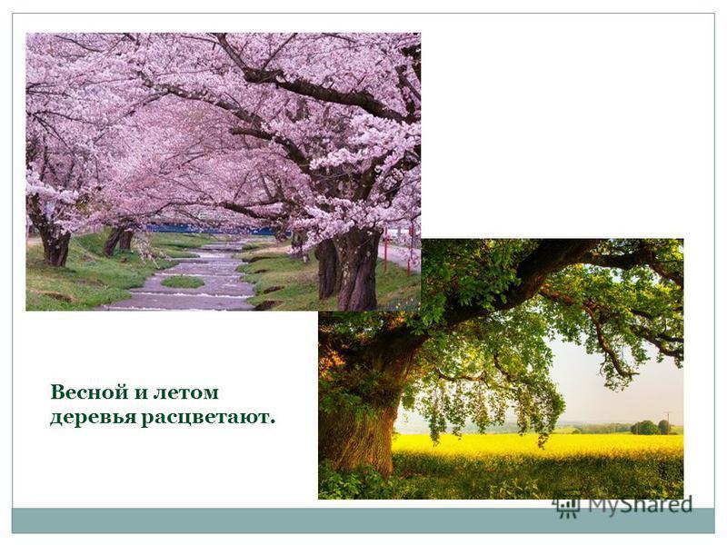 Весной и летом деревья расцветают.